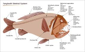 ocean animals science diagram printouts    deepsea fish skeletal system diagram
