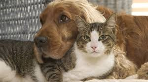 The free medical review should be you may know the aspca as an animal rights nonprofit, but the group has also teamed up with insurance company crum & forster to offer pet. Pet Medical Insurance Provider S List Of Top Names For Pets In 2020