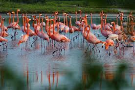 pictures of flamingos to color.  Color Flamingos  On Pictures Of To Color S