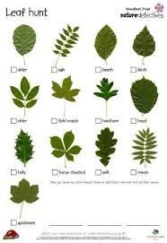 Tree Identification By Leaf Chart Photo Gallery