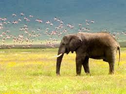wild wild life tanzania safari photo and video essay trading for example