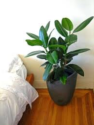 low maintenance office plants. Tall Indoor Plants Low Light Must See Houseplants That Require Much The . Maintenance Office