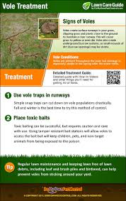 how to get rid of voles in garden. Beautiful Rid Vole Treatment Infographic For How To Get Rid Of Voles In Garden E