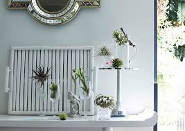 Air Plant Display 9 Unique Ideas To Display Indoor Plants Home Decor Singapore