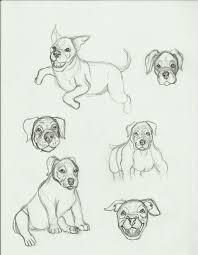 Bull Terrier Pitbull Puppy Wiring Diagram Database