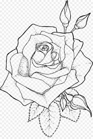 drawing line art coloring book rose outline