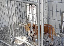 5 tips for ing a dog kennel