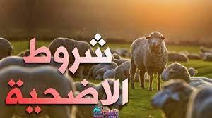 شروط الأضحية والمضحي في عيد الأضحى المبارك