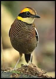 Pin on birds 17