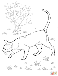 Small Picture Coloring Pages Cat Ragdoll Breed Cat Online Coloring Page