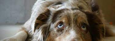 pet s eye color changing you may be right