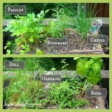 starting your own herb garden