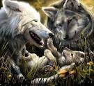 Почему люблю волков