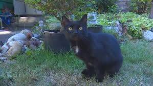 New Task Force Working To Find Cat Killer In Thurston County Komo