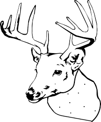 Small Picture Spotted Deer Coloring Pages Wecoloringpage