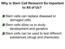 controversy stem cell essay stem cell controversy  controversy stem cell essay