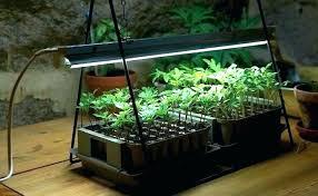 sunlight bulbs for plants sunlight lamp for plants sunlight lamp for plants grow lights plant stand