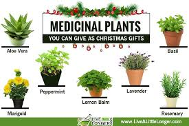 Best Gardening Gifts For Christmas  TelegraphChristmas Gift Plants