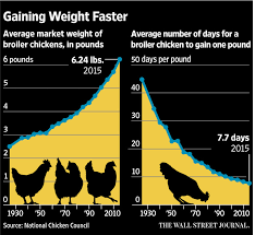Bigger Chickens Bring A Tough New Problem Woody Breast Wsj
