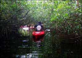 Why Choose Everglades Kayak Company