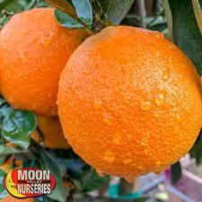 fruit trees trees moon valley nurseries