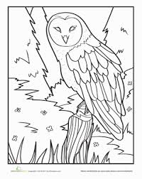 Small Picture Owl Worksheet Educationcom