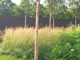 Inspiration for designing with grasses   Garden Design Eye