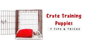 Puppy Bathroom Chart Crate Training A Puppy Fast The Dog Training Secret