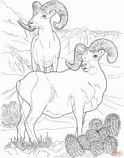 Small Picture Rocky Mountain Bighorn Sheep Coloring Page Free Printable