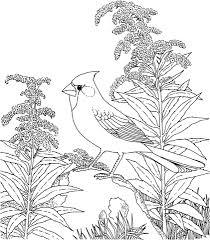Northern Cardinal And Goldenrod Kentucky Bird And Flower Coloring