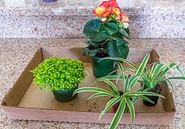create an indoor container garden using the the thriller filler and spiller
