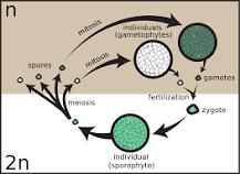 Mushroom Spores vs Mushroom Seeds
