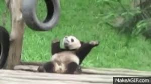 baby panda gif. Plain Panda Baby Panda GIF Throughout Gif B