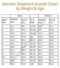 German Shepherd Size Chart Goldenacresdogs Com