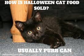 Cat halloween meme