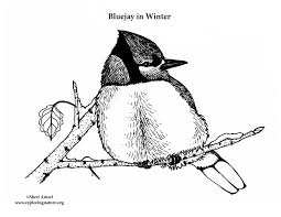 Small Picture Blue Jay in Winter Coloring Page