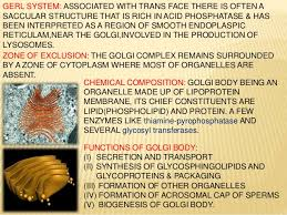 what is the golgi body made of