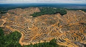 earthpulse essay straining our resources national geographic photo deforestation in borneo