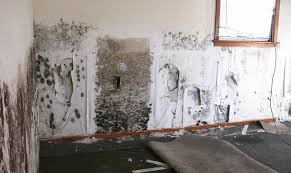learn how to get rid of black mold in