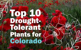 drought tolerant plants for colorado