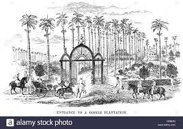 coffee plantation illustration. Plain Coffee The Entrance To A Brazilian Coffee Plantation Date 1879  Stock Image In Coffee Plantation Illustration T
