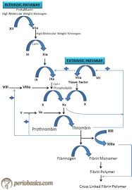 Bright Blood Clotting Chart Blood Coagulation Pathway Diagram