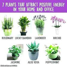 low maintenance office plants. Office Desk Plants For Best That Require No Sunlight Pertaining To . Low Maintenance