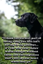 Loss Of Pet Quotes Mesmerizing Pet Loss Quotes Death Of A Gorgeous Best Dog Ideas On Horses