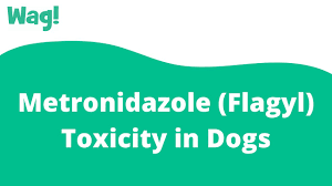 Metronidazole (Flagyl) Toxicity in Dogs