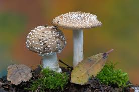 Image result for fungi reproductive system