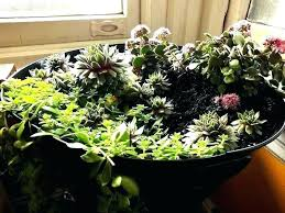 plants in a bowl door ides s plants in a bowl large glass spg g plants