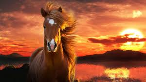 Sunset Wallpaper Horse Background Siboneycubancuisinecom
