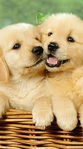 Cute Puppies Phone Wallpapers ...