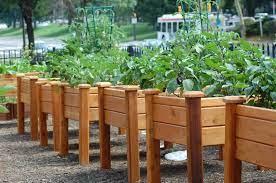 raised bed gardening primex garden